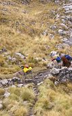 image of workhorses  - Mule train carrying loads in high mountains of Cordillera Huayhuash Andes Peru South America - JPG