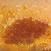 Yellow honeycomb full of honey