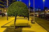 Decorative Tree Pruned A Round Shape, Natural City Decorations, Beginner Tree Shaping poster