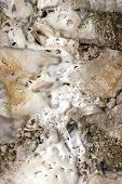 Limestone Deposits