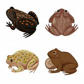 Vector Illustration Of Frog And Anuran Logo. Collection Of Frog And Animal Stock Vector Illustration poster