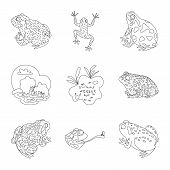 Vector Illustration Of Amphibian And Animal Logo. Set Of Amphibian And Nature Stock Vector Illustrat poster