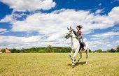 Постер, плакат: Конный спорт на лошадях