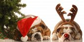 picture of dog christmas  - bulldog santa and bulldog under christmas tree - JPG