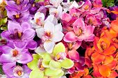colorful of artificial  orchid flower