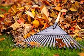 stock photo of piles  - Pile of fall leaves with fan rake on lawn