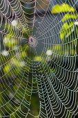 Spider Web Under Sunlight