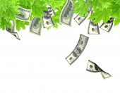 Money tree. Isolated over white
