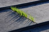 Grass and Concrete