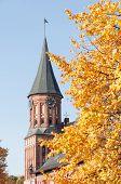 Kant der Kathedrale in Kaliningrad. Russland
