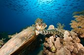 pic of sea-turtles  - hawksbill turtle  - JPG