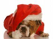 Bulldog Santa Scrooge