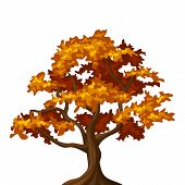 Autumn oak tree. Vector illustration.