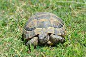 tortuga en la hierba