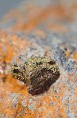 stock photo of iron pyrite  - Pyrite crystals on rock - iron disulfide