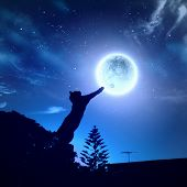 picture of goodnight  - Image of cat in jump catching moon - JPG