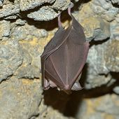 bat hanging in the cave