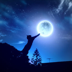 image of goodnight  - Image of cat in jump catching moon - JPG
