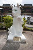 Cat in Kuching