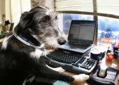 Dogs At Work