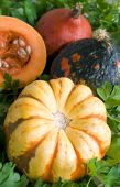 All Pumpkin