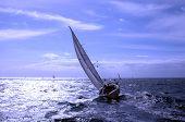 picture of sail-boats  - Regatta Transquadra - JPG