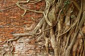 Tree root over red brick wall