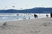 Baltic beach with gulls