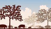 Illustration of free-range pigs feeding under fruit trees
