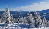 stock photo of zakarpattia  - Dragobrat mountain and sky - JPG