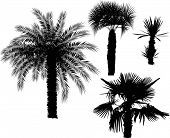 illustration with four palm trees isolated on white background