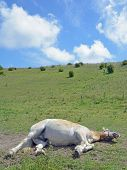 sleeping Horse,Ruegen island,Germany