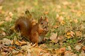 Squirrel Sitting On A Grass