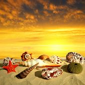 Conch shells with starfish on beach in the sunset