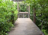 Wooden Walkway In The Garden