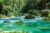 The Mountain Stream