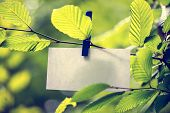 Blank White Note Paper Hanging In Green Leaves