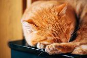 Peaceful Little Red Kitten Cat Sleeping On Bed