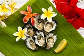picture of oyster shell  - Half dozen natural oysters on a banana leaf - JPG