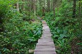 Cedar path through the Rainforest