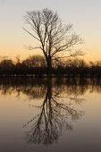 A tree and its reflection in a lake or river at sunset or sunrise