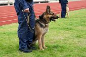 Policeman With A German Shepherd On A Training.