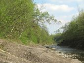 pic of bend  - Bended tree on the edge of the green forest on the river bank - JPG