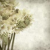 stock photo of bethlehem  - textured old paper background with start of bethlehem flowers - JPG