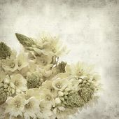 image of bethlehem  - textured old paper background with start of bethlehem flowers - JPG