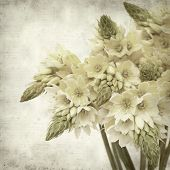 pic of bethlehem  - textured old paper background with start of bethlehem flowers - JPG