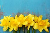 picture of daffodils  - Beautiful bouquet of yellow daffodils on wooden background - JPG