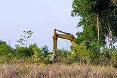 image of vegetation  - Heavy equipment strips all the vegetation off the side of a forest - JPG