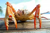 image of cooked crab  - Sea crab on the table near the sea - JPG