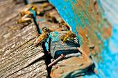 picture of working animal  - Busy bees close up view of the working bees - JPG